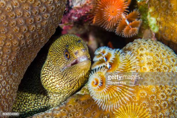 Hiding behind the x-mas tree worm