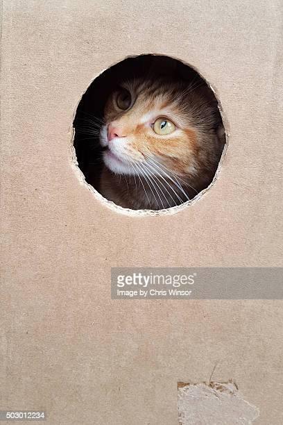 Hiding ginger