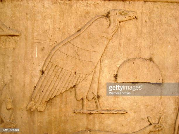 Hieroglyph of a vulture from a temple inscription Vultures as hieroglyphs had the phonetic value of the letter a Egypt Ancient Egyptian New Kingdom...