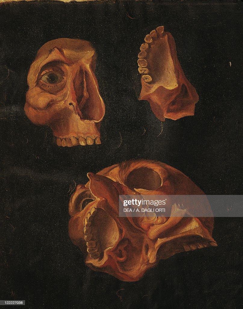 Hieronymus Fabricius Ab Aquapendente Anatomy Of Head Anatomical