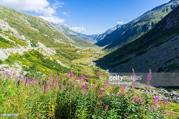 High altitude landscape with mountains and green meadows at Gotthardpass Passo del St Gottardo