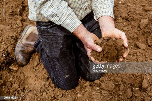 high angle close up of farmer kneeling on field, holding brown soil. - organic farm stock photos and pictures