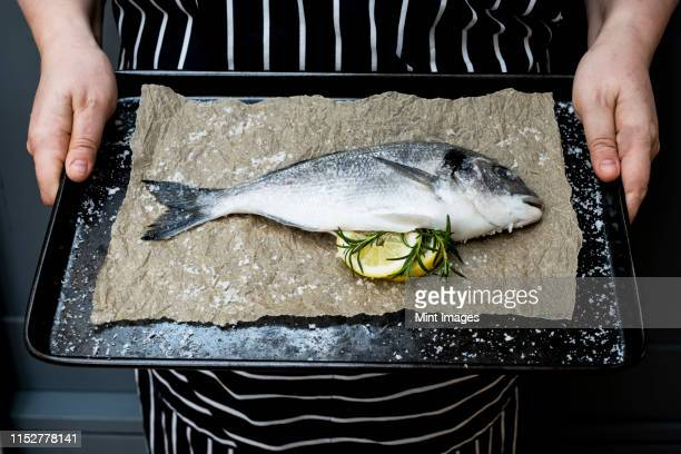 high angle close up of person holding baking tray with fresh sea bream, slices of lemon and rosemary sprigs. - catch of fish stock pictures, royalty-free photos & images