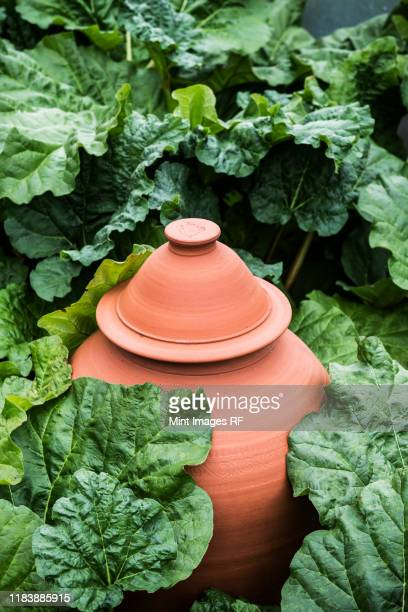 high angle close up of terracotta pot, rhubarb forcer in a vegetable bed. - vaso de barro imagens e fotografias de stock