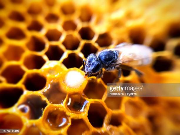 High Angle Close-Up Of Bee On Honeycomb