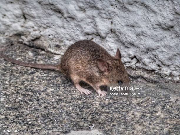 High Angle Close-Up Of Mouse On Rock