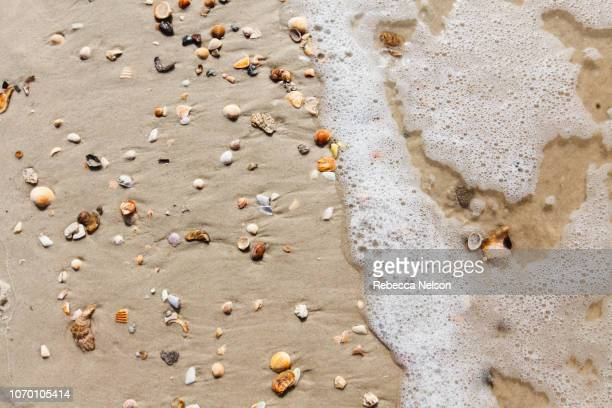 High angle image of seashells and surf on beach in Dauphin Island, Alabama
