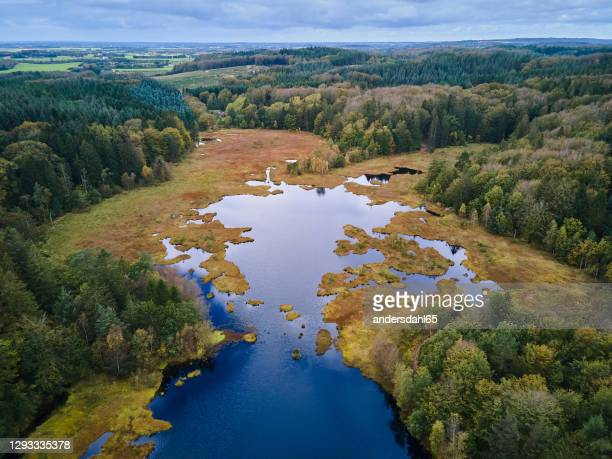 high angle landscape view to the bog in the forest - swamp stock pictures, royalty-free photos & images