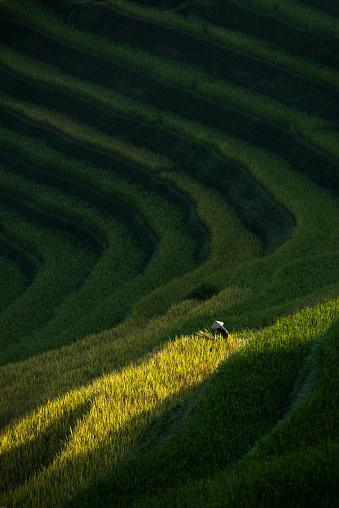 High angle of rice terraces. - gettyimageskorea