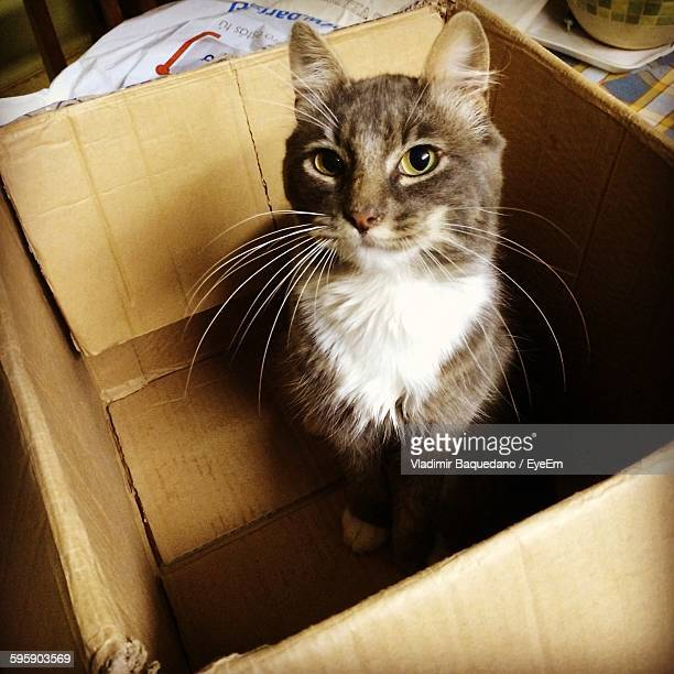 High Angle Portrait Of Cat In Cardboard Box At Home