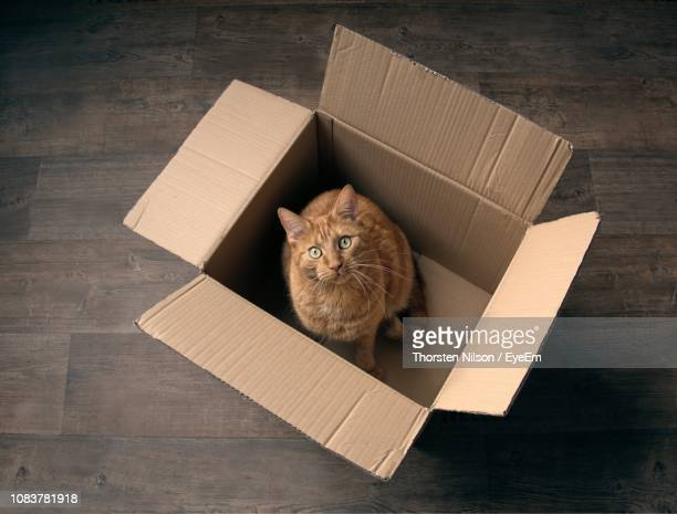 885 Cat Cardboard Box Photos and Premium High Res Pictures - Getty Images