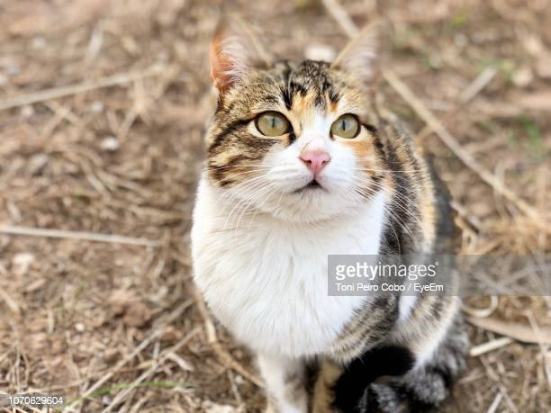 high angle portrait of cat sitting outdoors - {{relatedsearchurl('london eye')}} stock photos and pictures