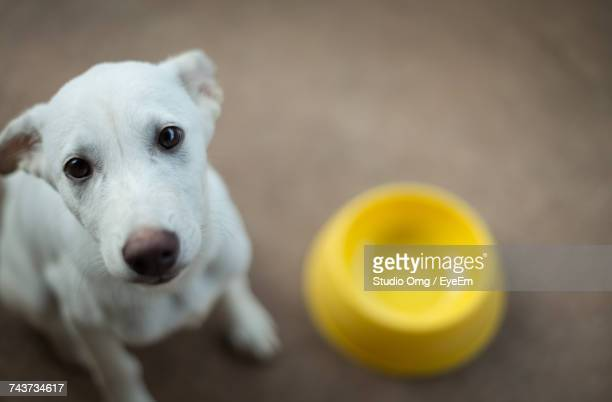 High Angle Portrait Of Dog Sitting By Bowl