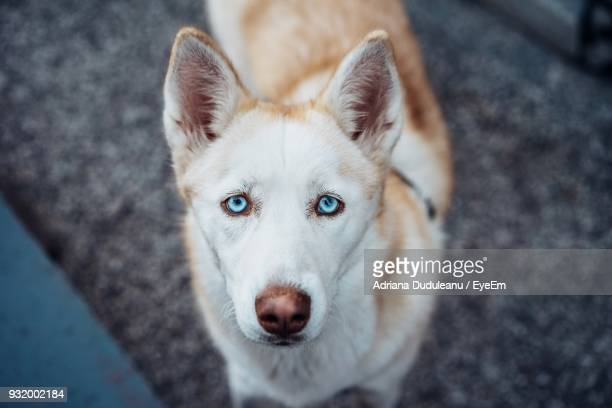 High Angle Portrait Of Dog Standing On Footpath