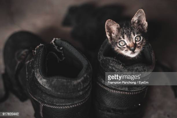 High Angle Portrait Of Kitten In Shoe