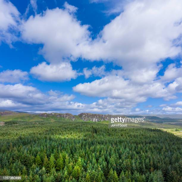 high angle square composition view of scottish countryside with pine forest and hills. - galloway scotland stock pictures, royalty-free photos & images