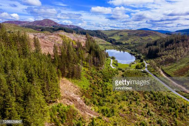 high angle view captured by a drone of an area of pine forest with recently felled trees - johnfscott stock pictures, royalty-free photos & images