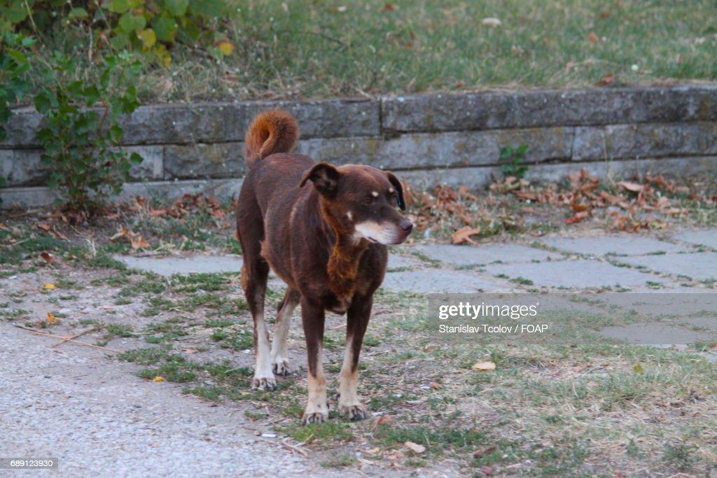 High angle view dog : Stock Photo