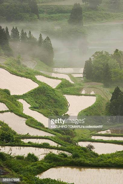 High Angle View Hoshitouge Terraced Field Rice Fog