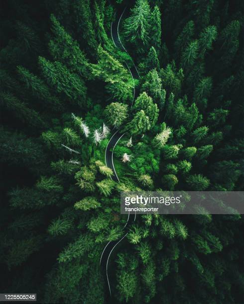 high angle view in washington state - forest road stock pictures, royalty-free photos & images