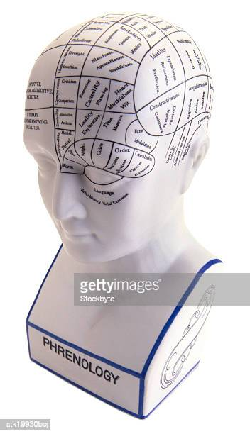 high angle view of a bust marked with medical terms