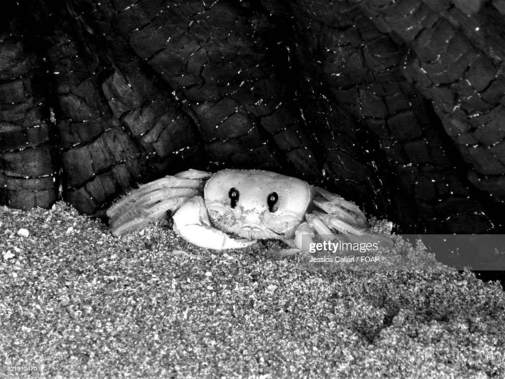 High angle view of a crab : Stock Photo
