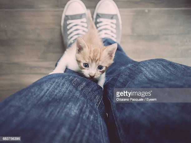 High Angle View Of A Crawling Kitten