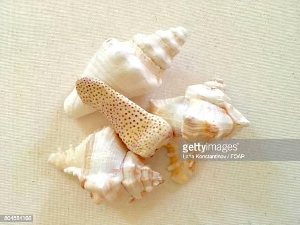 High angle view of a seashells