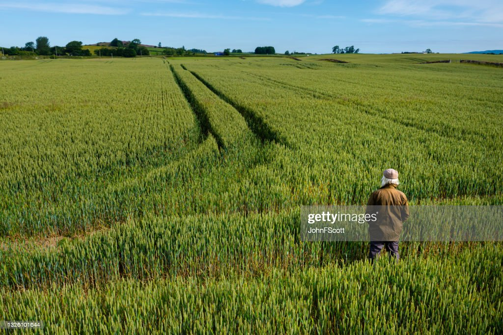 High angle view of a senior man in a field : Stock Photo