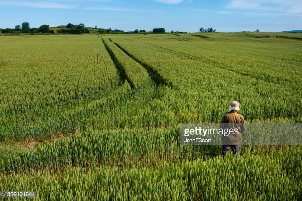 high angle view of a senior man in a field - johnfscott stock pictures, royalty-free photos & images