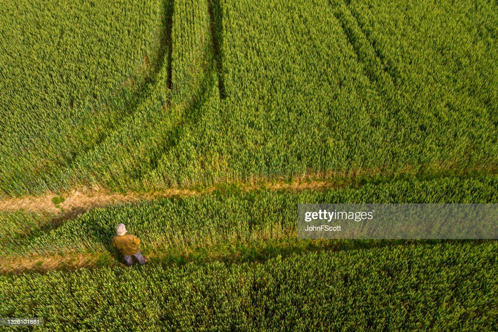 High angle view of a senior man standing in a field : Stock Photo
