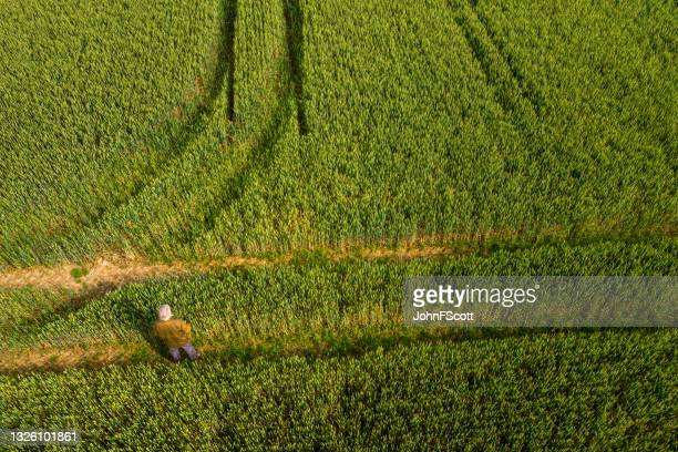 high angle view of a senior man standing in a field - johnfscott stock pictures, royalty-free photos & images