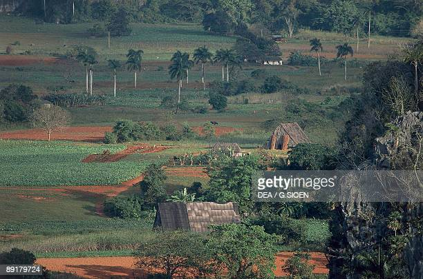 High angle view of a tobacco farm Vinales Valley Pinar del Rio Cuba