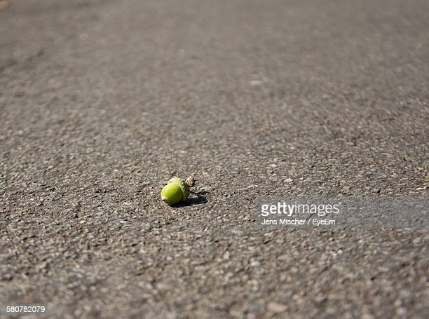 High Angle View Of Acorn On Road