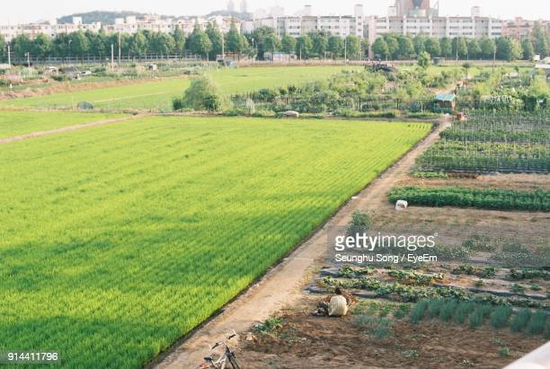 high angle view of agricultural field against sky - bucheon stock pictures, royalty-free photos & images