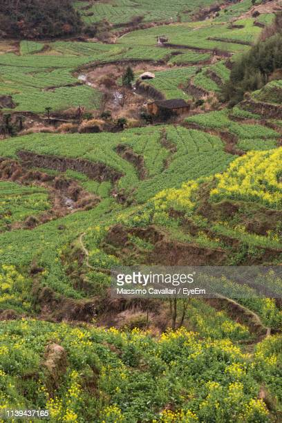 high angle view of agricultural field - massimo cavallari stock pictures, royalty-free photos & images