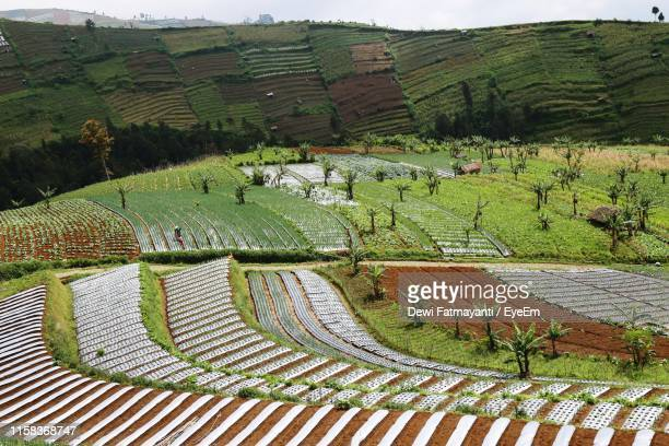 high angle view of agricultural field - dewi fatmayanti stock photos and pictures