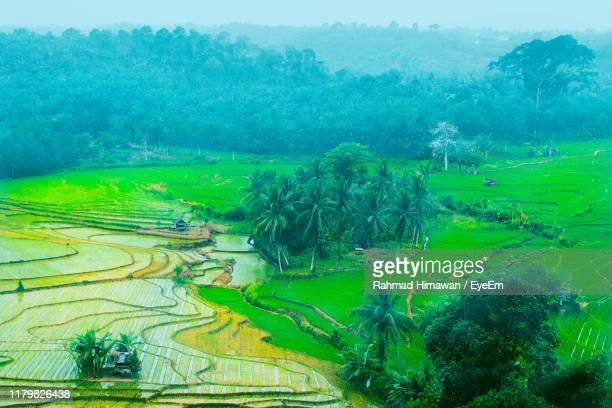high angle view of agricultural field - rahmad himawan stock photos and pictures