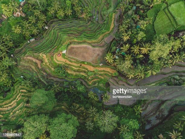 high angle view of agricultural field - bortes foto e immagini stock