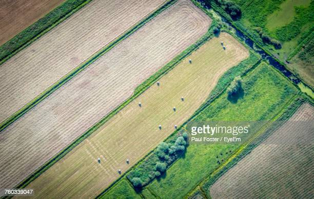 high angle view of agricultural field - ケンブリッジシャー州 ストックフォトと画像