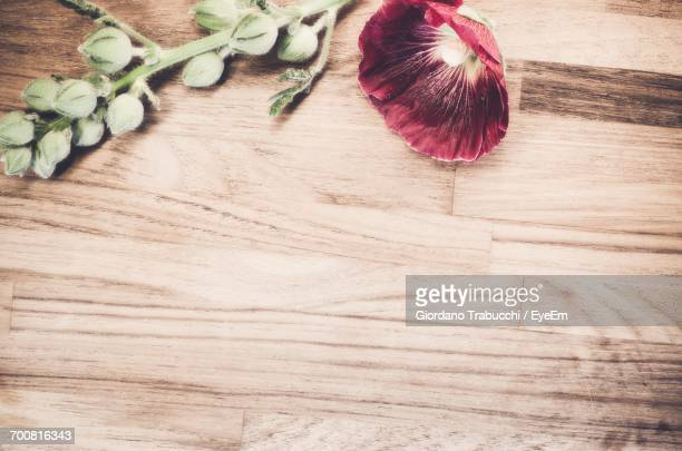 high angle view of alcea rosea on table - hollyhock stock pictures, royalty-free photos & images