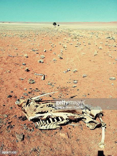 High Angle View Of Animal Skeleton In Desert