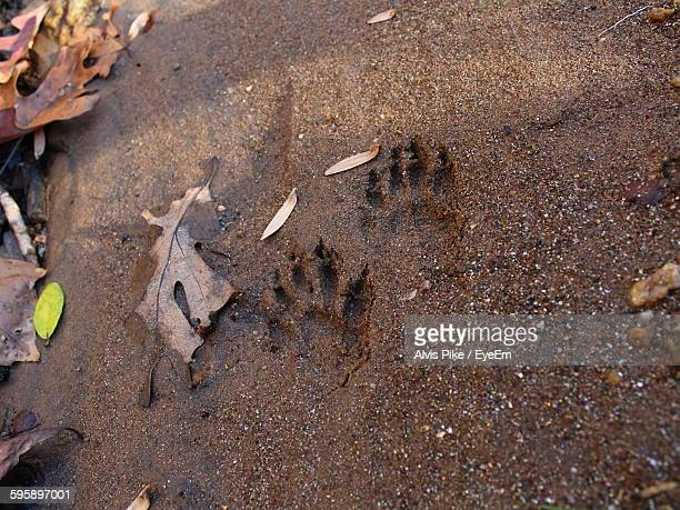 High Angle View Of Animal Track By Autumn Leaves On Wet Sand