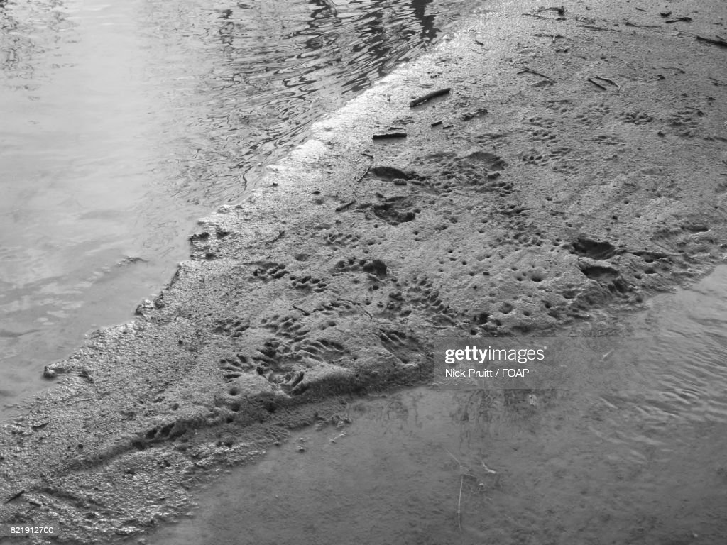 High angle view of animal tracks on sand : Stock Photo
