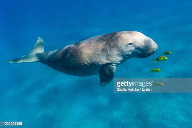 high angle view of animals swimming in sea - mammal stock pictures, royalty-free photos & images