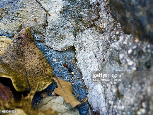 High Angle View Of Ant On Rock By Dry Leaves