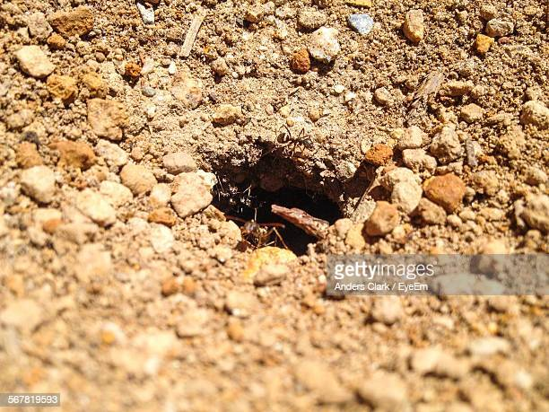High Angle View Of Ants In Hole On Dirt Field