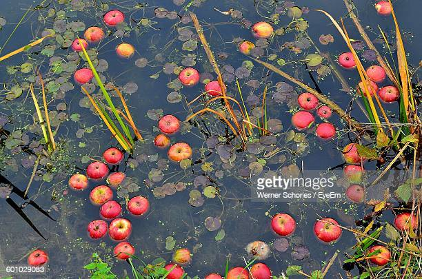 High Angle View Of Apples Floating In Pond