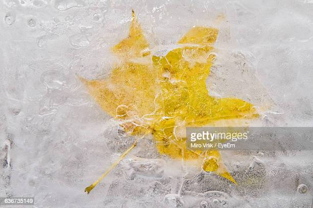 High Angle View Of Autumn Leaf In Frozen Lake