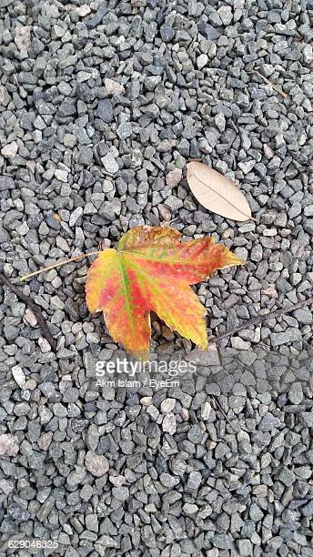 high angle view of autumn leaf on gravels - lubbock stock pictures, royalty-free photos & images